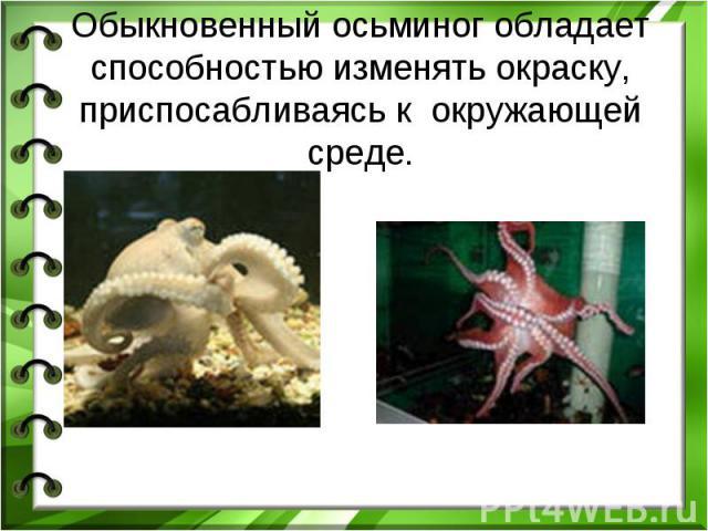 Обыкновенный осьминог обладает способностью изменять окраску, приспосабливаясь к окружающей среде.