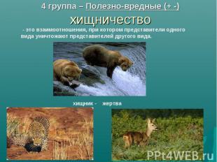 4 группа – Полезно-вредные (+ -) хищничество - это взаимоотношения, при котором