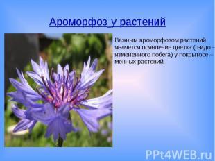 Ароморфоз у растенийВажным ароморфозом растений является появление цветка ( видо