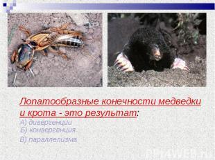 Лопатообразные конечности медведки и крота - это результат: А) дивергенции Б) ко