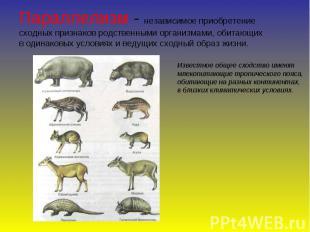 Параллелизм - независимое приобретение сходных признаков родственными организмам