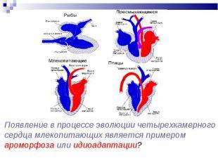 Появление в процессе эволюции четырехкамерного сердца млекопитающих является при