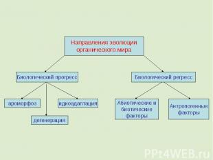 Направления эволюции органического мира