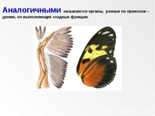 Аналогичными называются органы, разные по происхож – дению, но выполняющие сходн