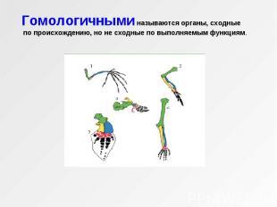 Гомологичными называются органы, сходные по происхождению, но не сходные по выпо