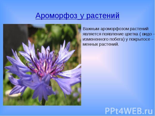 Ароморфоз у растенийВажным ароморфозом растений является появление цветка ( видо – измененного побега) у покрытосе – менных растений.