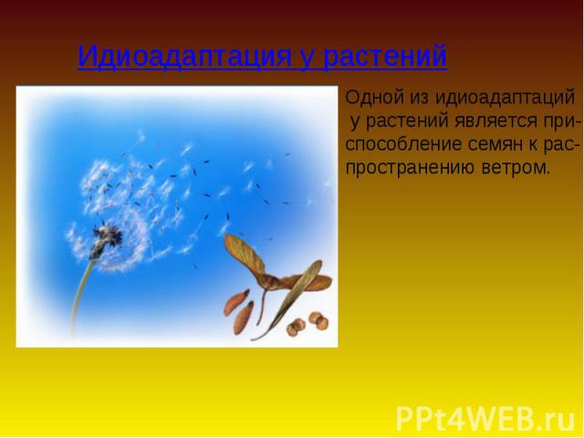 Идиоадаптация у растений Одной из идиоадаптаций у растений является при- способление семян к рас- пространению ветром.
