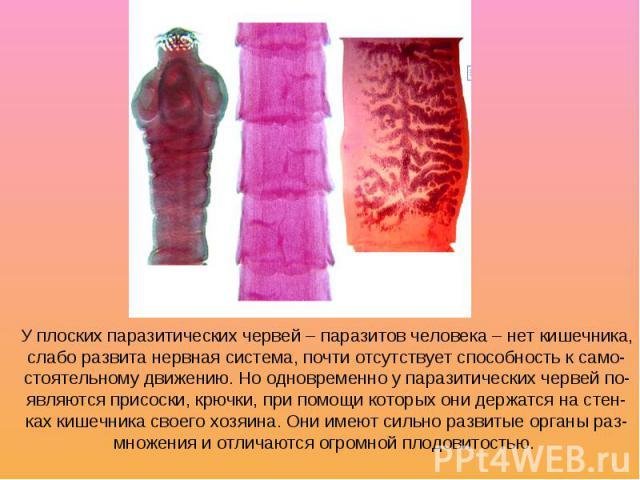 У плоских паразитических червей – паразитов человека – нет кишечника, слабо развита нервная система, почти отсутствует способность к само- стоятельному движению. Но одновременно у паразитических червей по- являются присоски, крючки, при помощи котор…