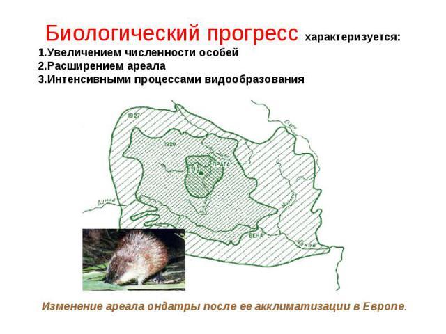 Биологический прогресс характеризуется: 1.Увеличением численности особей 2.Расширением ареала 3.Интенсивными процессами видообразования Изменение ареала ондатры после ее акклиматизации в Европе.