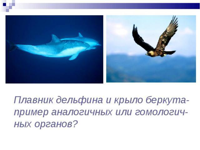 Плавник дельфина и крыло беркута- пример аналогичных или гомологич- ных органов?