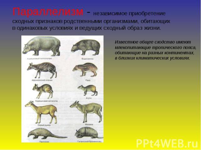 Параллелизм - независимое приобретение сходных признаков родственными организмами, обитающих в одинаковых условиях и ведущих сходный образ жизни. Известное общее сходство имеют млекопитающие тропического пояса, обитающие на разных континентах, в бли…