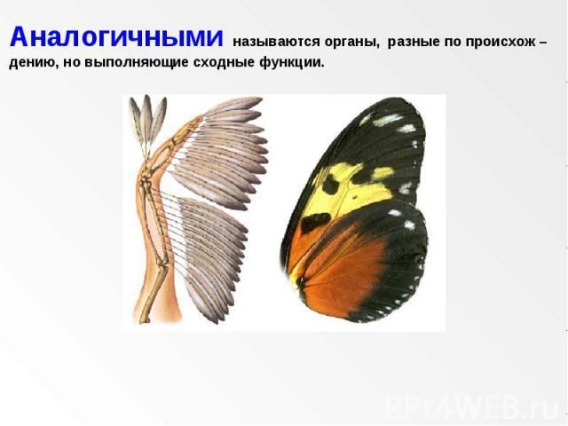 Аналогичными называются органы, разные по происхож – дению, но выполняющие сходные функции.