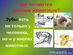 Как питаются разные животные? Зубы есть не только у человека, но и у многих живо