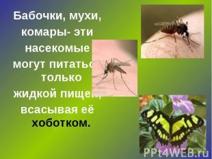 Бабочки, мухи, комары- эти насекомые могут питаться только жидкой пищей, всасыва