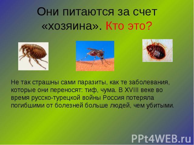 Они питаются за счет «хозяина». Кто это? Не так страшны сами паразиты, как те заболевания, которые они переносят: тиф, чума. В XVIII веке во время русско-турецкой войны Россия потеряла погибшими от болезней больше людей, чем убитыми.