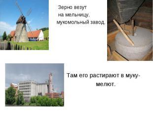Зерно везут на мельницу, мукомольный завод. Там его растирают в муку- мелют.