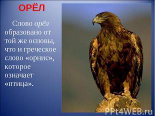 ОРЁЛ Слово орёл образовано от той же основы, что и греческое слово «орнис», кото