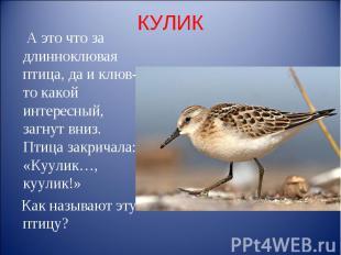КУЛИК А это что за длинноклювая птица, да и клюв-то какой интересный, загнут вни