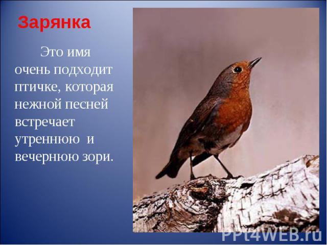 Зарянка Это имя очень подходит птичке, которая нежной песней встречает утреннюю и вечернюю зори.