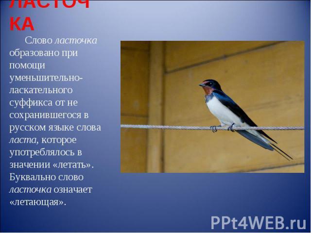 ЛАСТОЧКА Слово ласточка образовано при помощи уменьшительно-ласкательного суффикса от не сохранившегося в русском языке слова ласта, которое употреблялось в значении «летать». Буквально слово ласточка означает «летающая».
