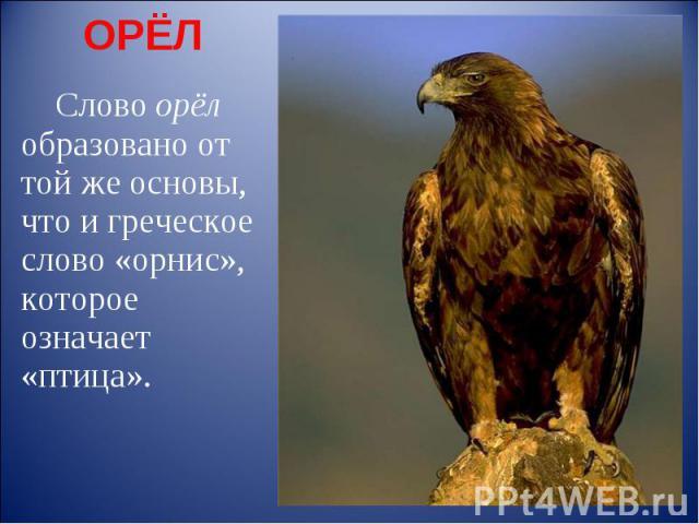 ОРЁЛ Слово орёл образовано от той же основы, что и греческое слово «орнис», которое означает «птица».