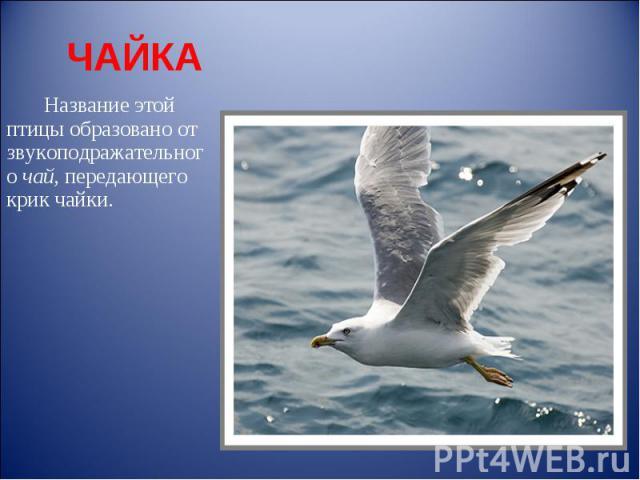 ЧАЙКА Название этой птицы образовано от звукоподражательного чай, передающего крик чайки.