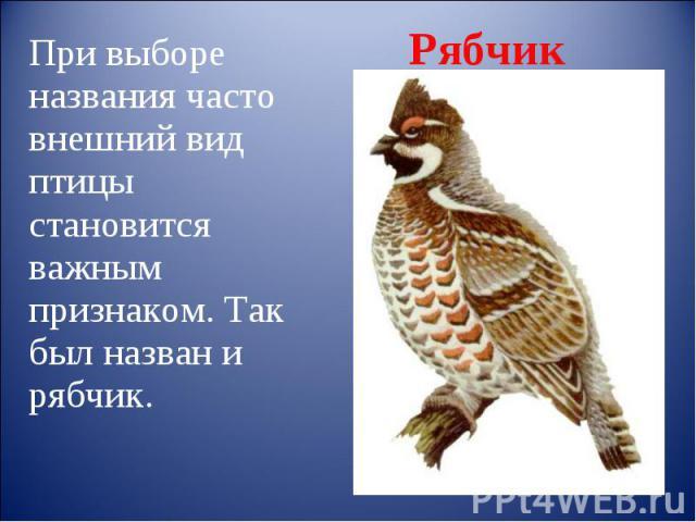 Рябчик При выборе названия часто внешний вид птицы становится важным признаком. Так был назван и рябчик.