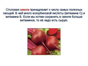 Столовая свекла принадлежит к числу самых полезных овощей. В ней много аскорбино