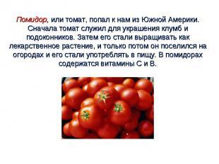 Помидор, или томат, попал к нам из Южной Америки. Сначала томат служил для украш