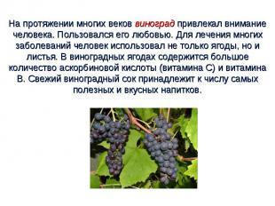 На протяжении многих веков виноград привлекал внимание человека. Пользовался его