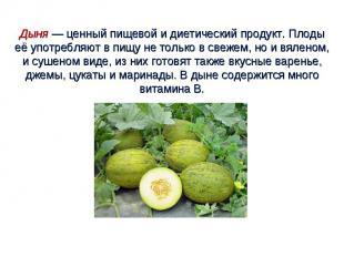 Дыня — ценный пищевой и диетический продукт. Плоды её употребляют в пищу не толь
