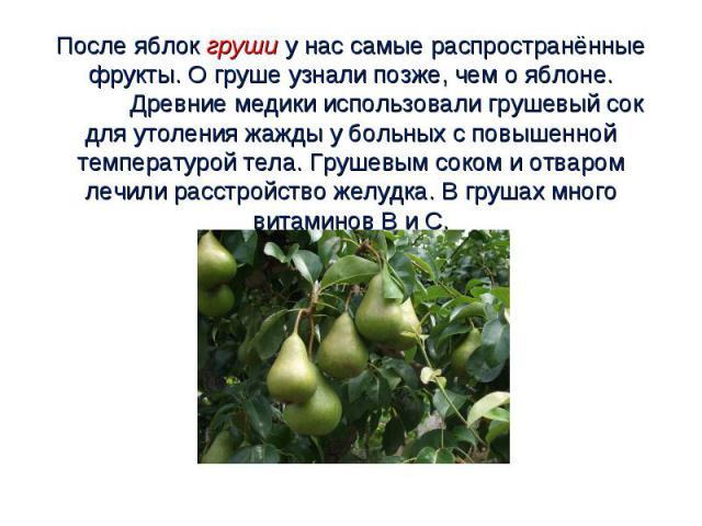 После яблок груши у нас самые распространённые фрукты. О груше узнали позже, чем о яблоне. Древние медики использовали грушевый сок для утоления жажды у больных с повышенной температурой тела. Грушевым соком и отваром лечили расстройство желудка. В …