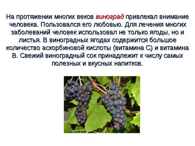 На протяжении многих веков виноград привлекал внимание человека. Пользовался его любовью. Для лечения многих заболеваний человек использовал не только ягоды, но и листья. В виноградных ягодах содержится большое количество аскорбиновой кислоты (витам…