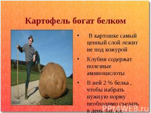Картофель богат белком В картошке самый ценный слой лежит не под кожурой Клубни