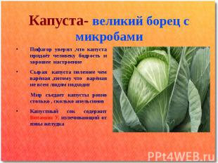 Капуста- великий борец с микробами Пифагор уверял ,что капуста придаёт человеку