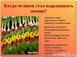 Когда человек стал выращивать овощи? Древние люди занимались сбором бобовых и ко