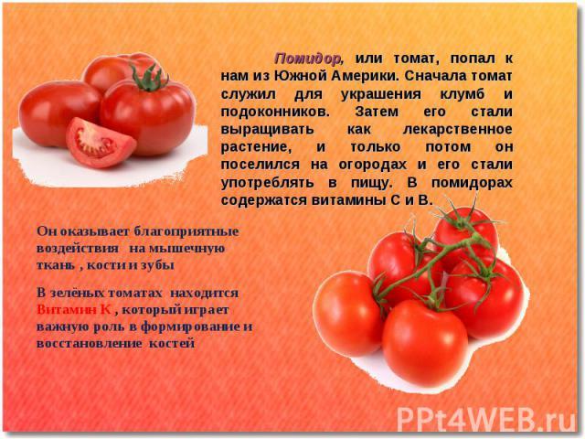 Помидор, или томат, попал к нам из Южной Америки. Сначала томат служил для украшения клумб и подоконников. Затем его стали выращивать как лекарственное растение, и только потом он поселился на огородах и его стали употреблять в пищу. В помидорах сод…
