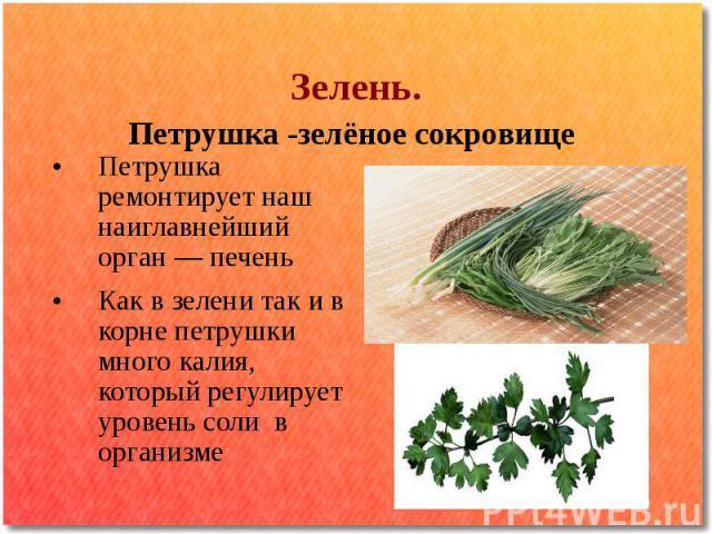 Зелень. Петрушка -зелёное сокровище Петрушка ремонтирует наш наиглавнейший орган — печень Как в зелени так и в корне петрушки много калия, который регулирует уровень соли в организме