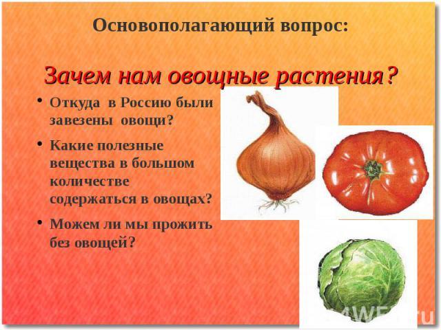Основополагающий вопрос: Зачем нам овощные растения? Откуда в Россию были завезены овощи? Какие полезные вещества в большом количестве содержаться в овощах? Можем ли мы прожить без овощей?