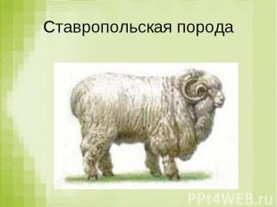 Ставропольская порода