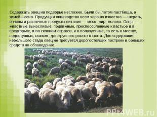 Содержать овец на подворье несложно. Были бы летом пастбища, а зимой—сено. Проду