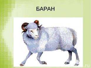 БАРАН