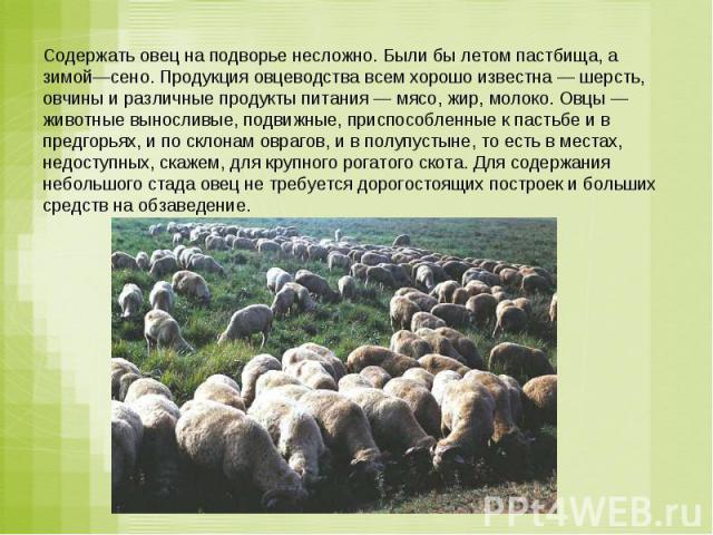 Содержать овец на подворье несложно. Были бы летом пастбища, а зимой—сено. Продукция овцеводства всем хорошо известна — шерсть, овчины и различные продукты питания — мясо, жир, молоко. Овцы — животные выносливые, подвижные, приспособленные к пастьбе…