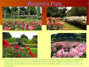 Regent's Park Схемы посадок роз, использованные в Саду роз королевы Мэри, редко