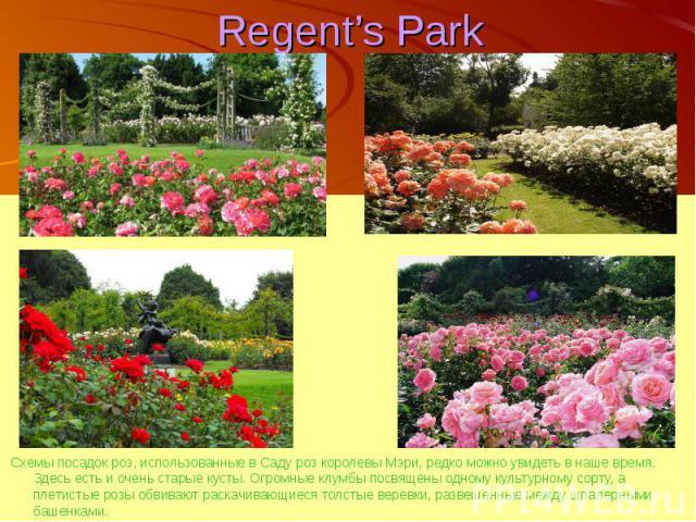 Regent's Park Схемы посадок роз, использованные в Саду роз королевы Мэри, редко можно увидеть в наше время. Здесь есть и очень старые кусты. Огромные клумбы посвящены одному культурному сорту, а плетистые розы обвивают раскачивающиеся толстые веревк…