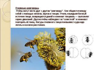 """Пчелиные «разговоры» Пчёлы могут вести друг с другом """"разговоры"""". Они общаются м"""