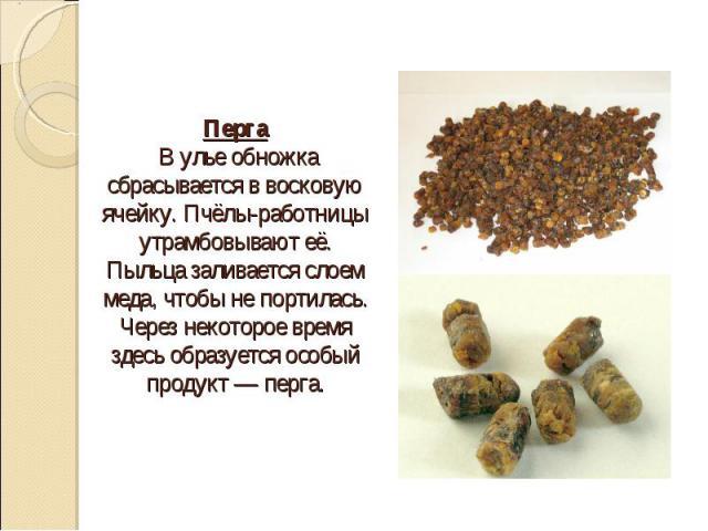Перга В улье обножка сбрасывается в восковую ячейку. Пчёлы-работницы утрамбовывают её. Пыльца заливается слоем меда, чтобы не портилась. Через некоторое время здесь образуется особый продукт — перга.