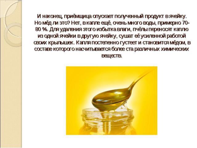И наконец, приёмщица опускает полученный продукт в ячейку. Но мёд ли это? Нет, в капле ещё, очень много воды, примерно 70-80 %. Для удаления этого избытка влаги, пчёлы переносят каплю из одной ячейки в другую ячейку, сушат её усиленной работой своих…