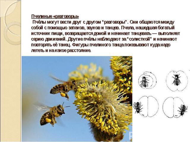 """Пчелиные «разговоры» Пчёлы могут вести друг с другом """"разговоры"""". Они общаются между собой с помощью запахов, звуков и танцев. Пчела, нашедшая богатый источник пищи, возвращается домой и начинает танцевать — выполняет серию движений. Другие пчёлы на…"""