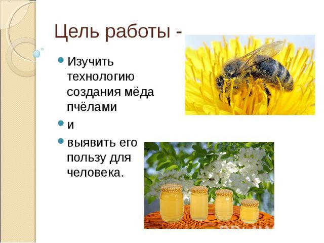 Цель работы -Изучить технологию создания мёда пчёлами и выявить его пользу для человека.